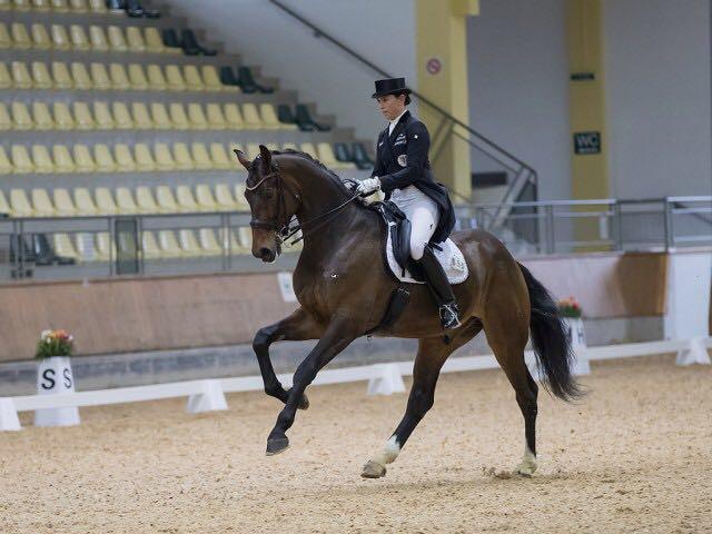 Galopp Damon´s Classic unter Belinda Weinbauer, CDI Stadl-Paura